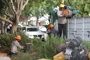 Emergency Tree Service in Upland